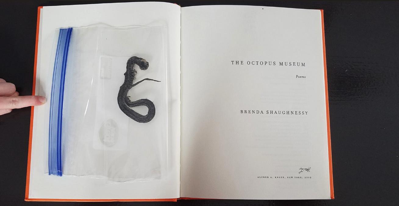 Snake in plastic bag inside library book